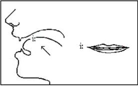 Học cách phát âm nguyên âm dài I trong tiếng Anh